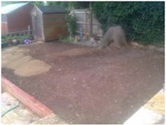 Lawn area prior to stripping